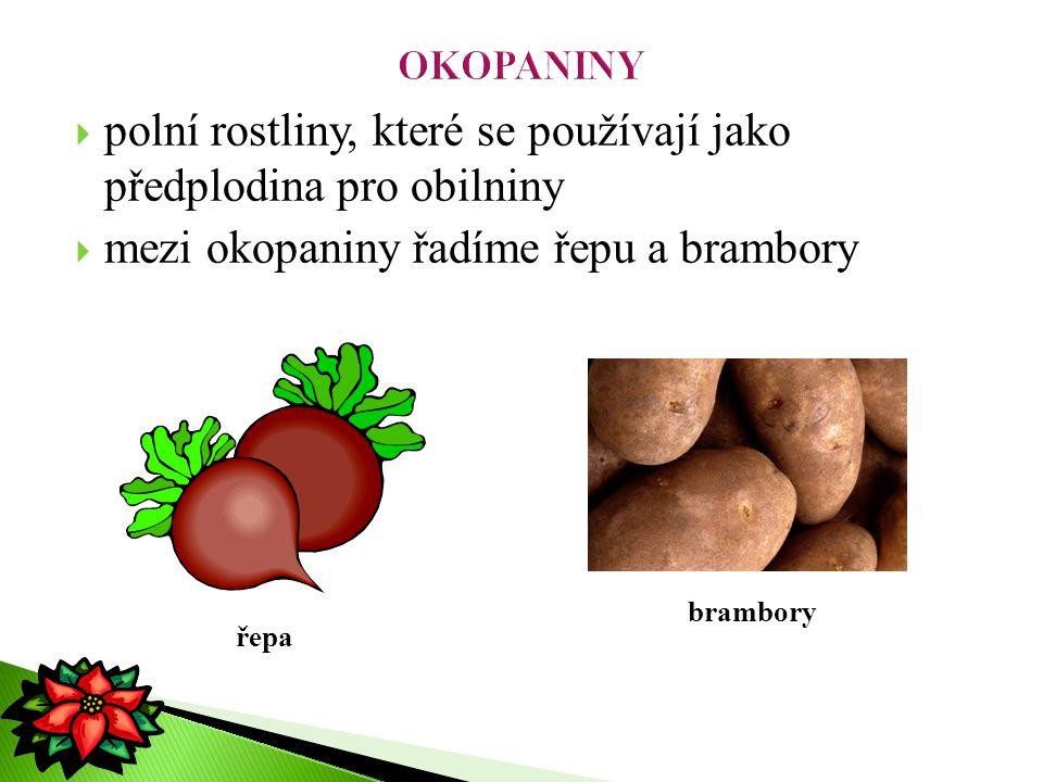 polní rostliny, které se používají jako předplodina pro obilniny