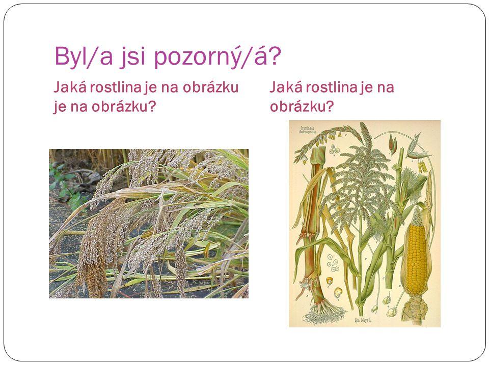 Byl/a jsi pozorný/á Jaká rostlina je na obrázku je na obrázku