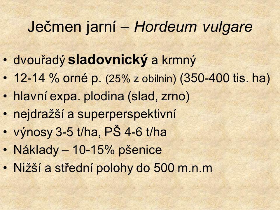 Ječmen jarní – Hordeum vulgare