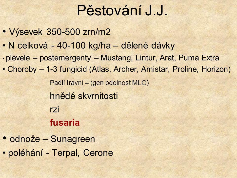 Pěstování J.J. odnože – Sunagreen Výsevek 350-500 zrn/m2