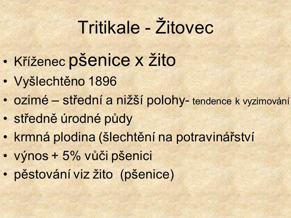 Tritikale - Žitovec Kříženec pšenice x žito Vyšlechtěno 1896