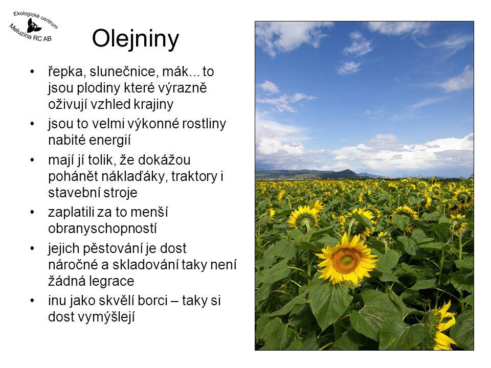 Olejniny řepka, slunečnice, mák... to jsou plodiny které výrazně oživují vzhled krajiny. jsou to velmi výkonné rostliny nabité energií.