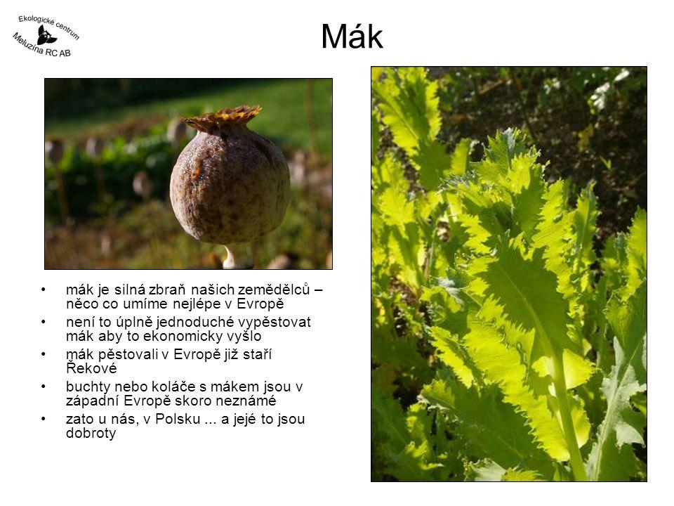 Mák mák je silná zbraň našich zemědělců – něco co umíme nejlépe v Evropě. není to úplně jednoduché vypěstovat mák aby to ekonomicky vyšlo.