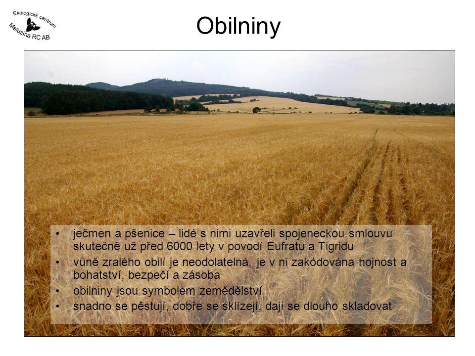 Obilniny ječmen a pšenice – lidé s nimi uzavřeli spojeneckou smlouvu skutečně už před 6000 lety v povodí Eufratu a Tigridu.