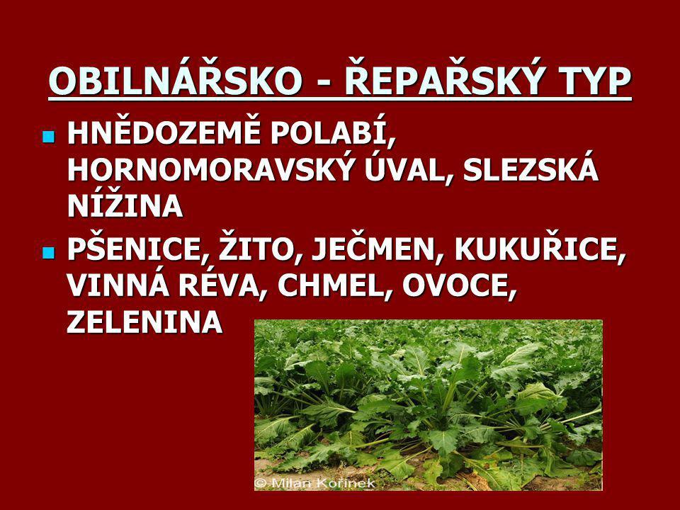 OBILNÁŘSKO - ŘEPAŘSKÝ TYP