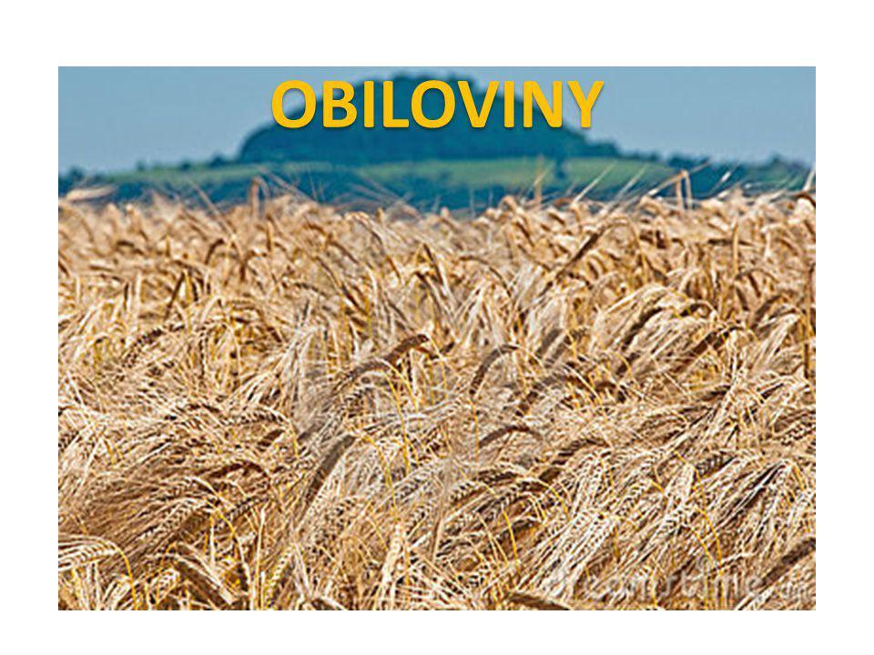 OBILOVINY
