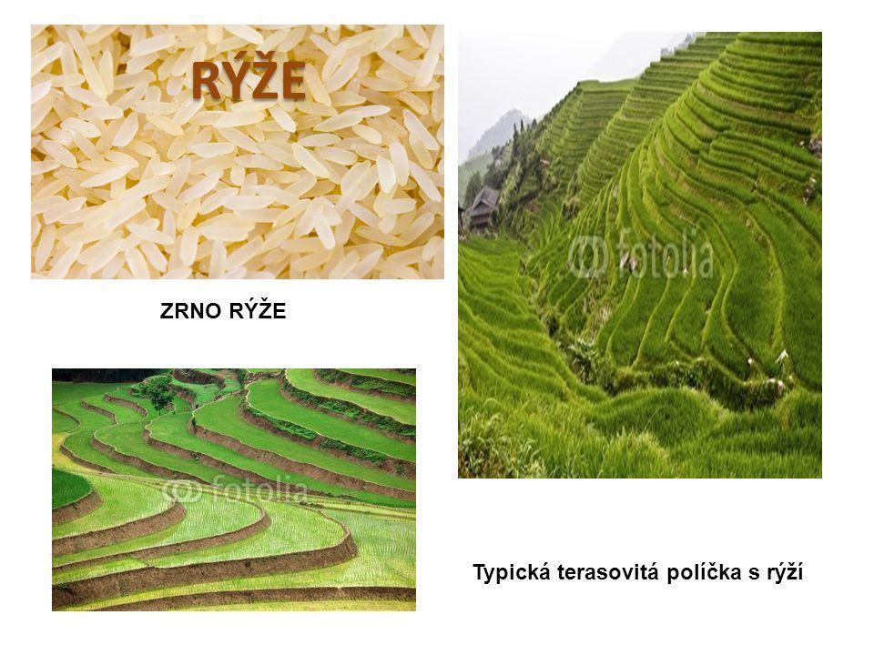 Typická terasovitá políčka s rýží