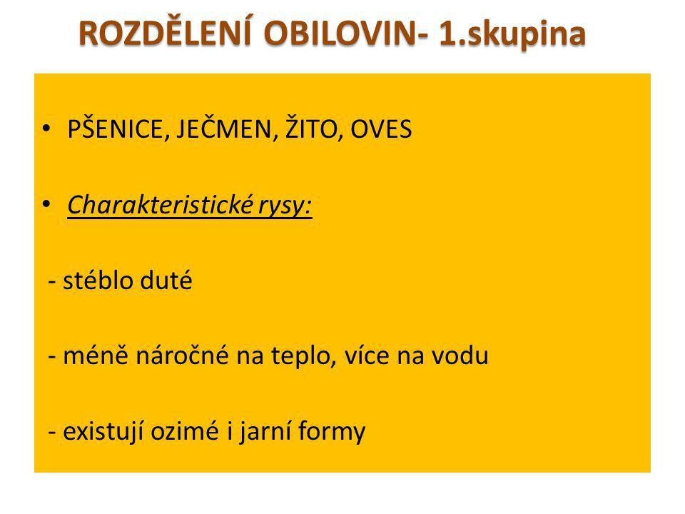 ROZDĚLENÍ OBILOVIN- 1.skupina