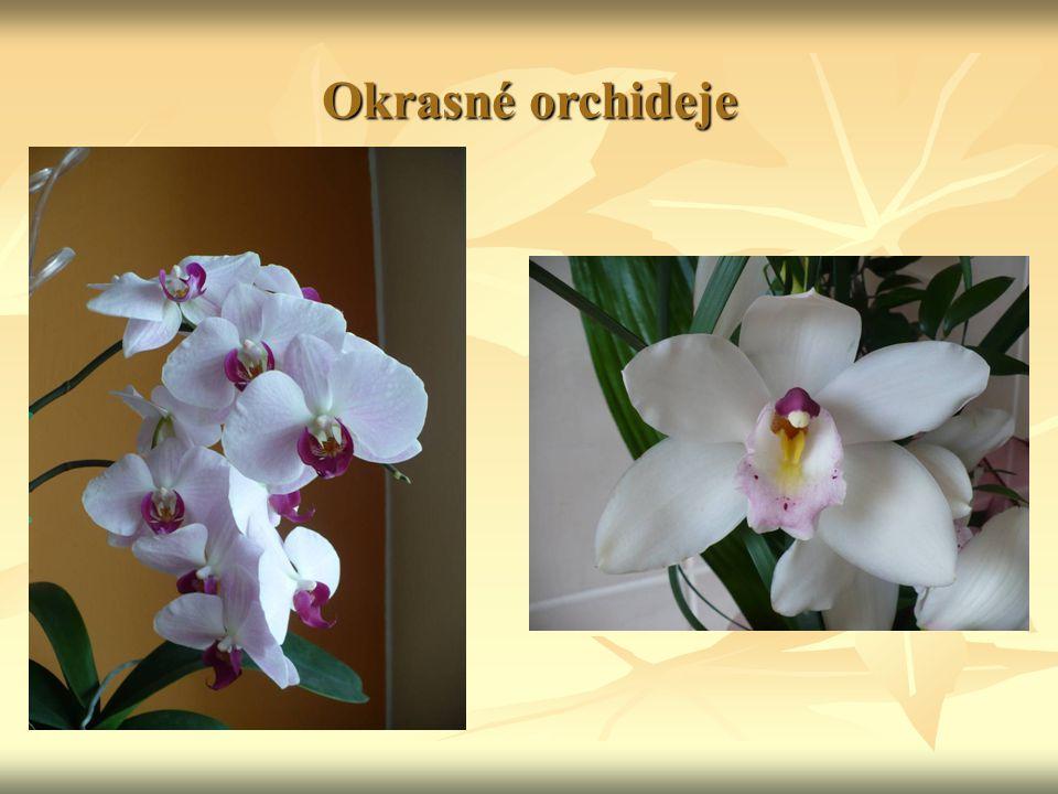 Okrasné orchideje