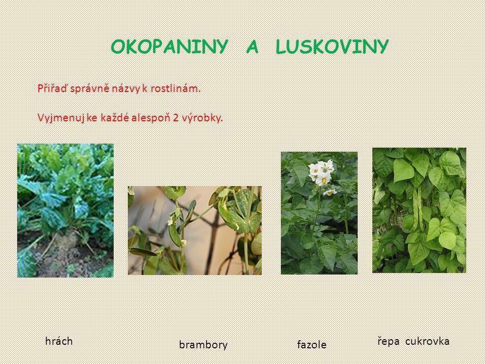 OKOPANINY A LUSKOVINY Přiřaď správně názvy k rostlinám.