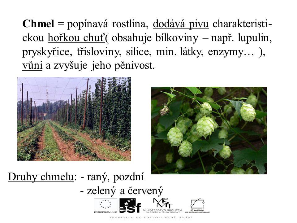 Chmel = popínavá rostlina, dodává pivu charakteristi-