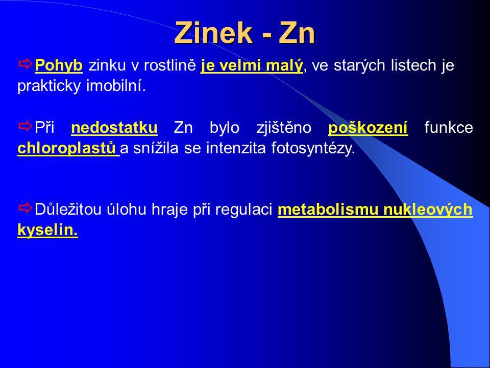 Zinek - Zn Pohyb zinku v rostlině je velmi malý, ve starých listech je prakticky imobilní.