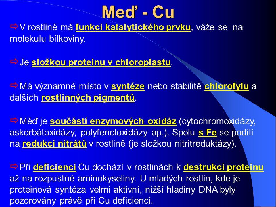 Meď - Cu V rostlině má funkci katalytického prvku, váže se na molekulu bílkoviny. Je složkou proteinu v chloroplastu.