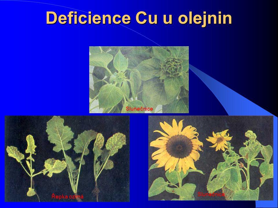 Deficience Cu u olejnin