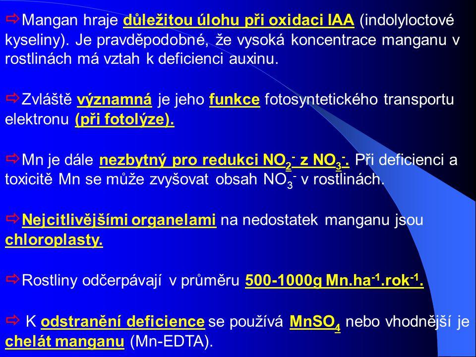 Mangan hraje důležitou úlohu při oxidaci IAA (indolyloctové kyseliny)
