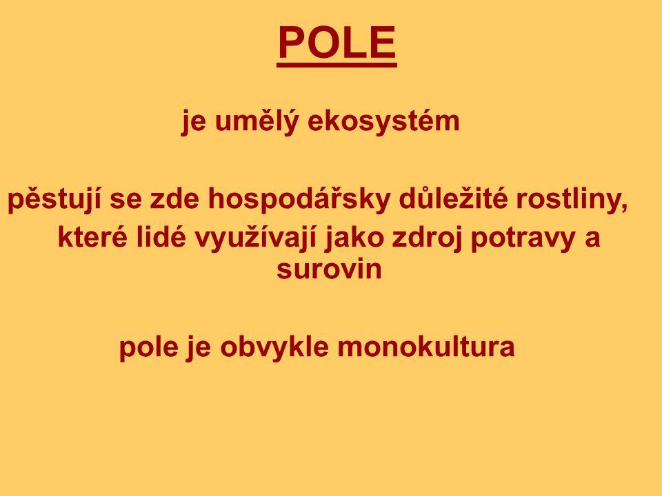 POLE je umělý ekosystém pěstují se zde hospodářsky důležité rostliny,