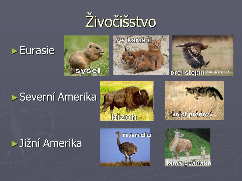 Živočišstvo rys karakal sysel orel stepní kojot prériový bizon nandu