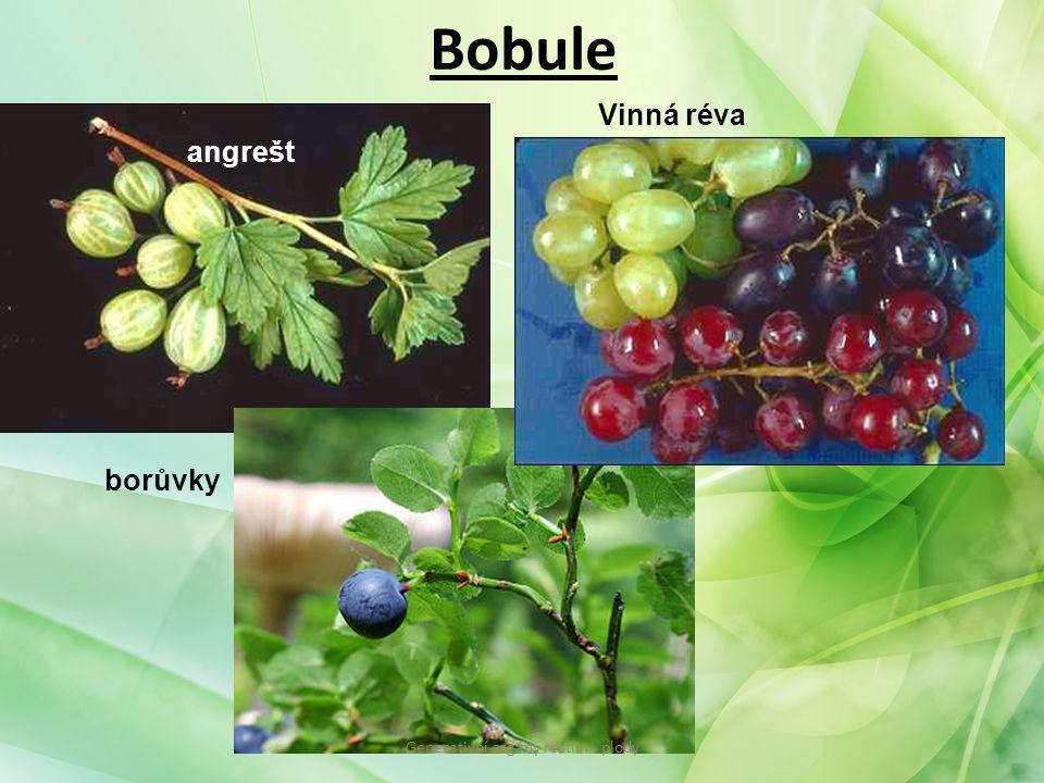 Generativní orgány rostlin - plody
