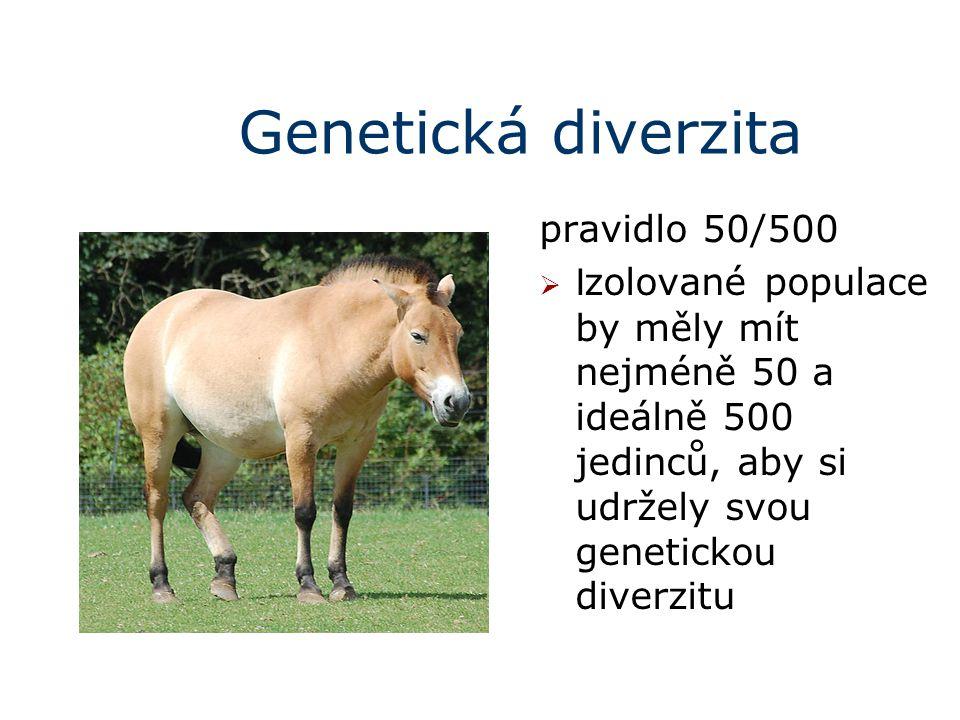 Genetická diverzita pravidlo 50/500