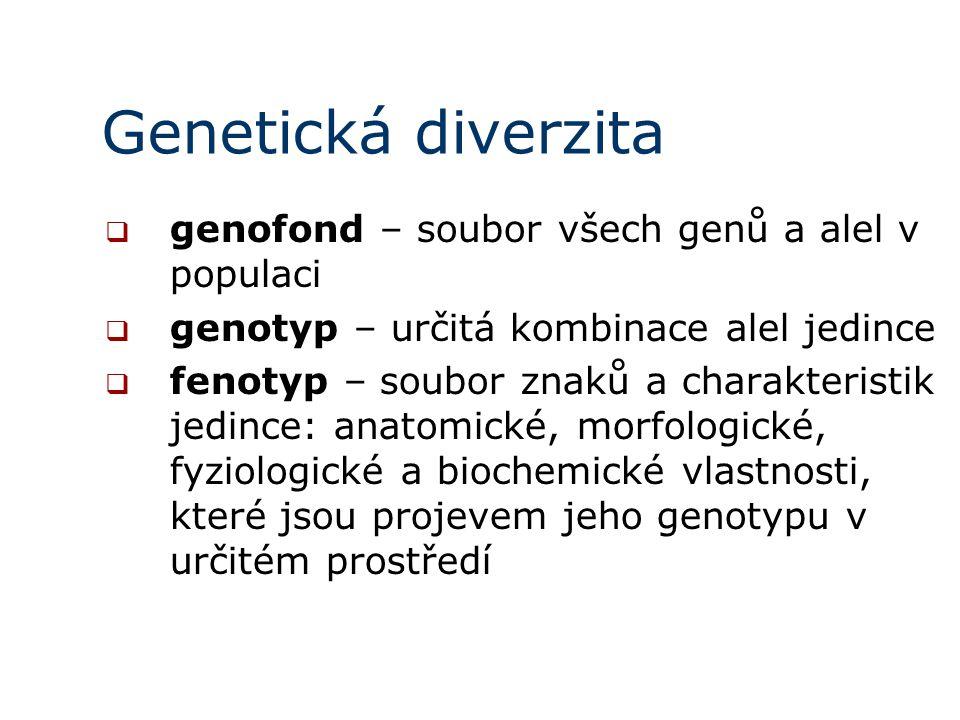 Genetická diverzita genofond – soubor všech genů a alel v populaci