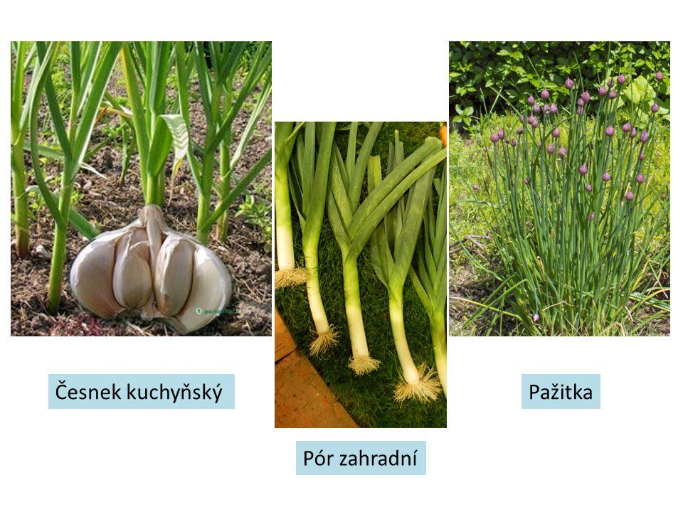 Česnek kuchyňský Pažitka Pór zahradní