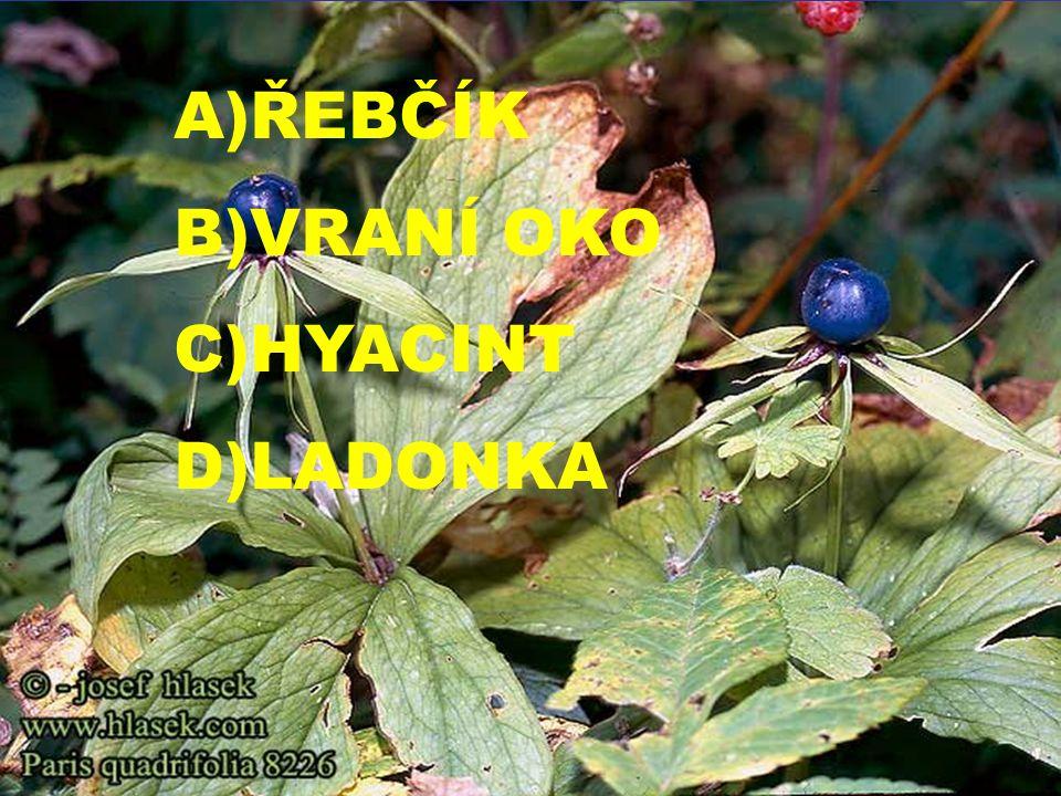 A)ŘEBČÍK B)VRANÍ OKO C)HYACINT D)LADONKA