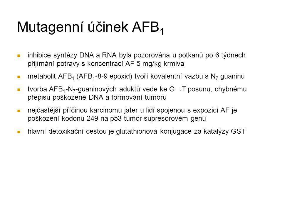 Mutagenní účinek AFB1 inhibice syntézy DNA a RNA byla pozorována u potkanů po 6 týdnech přijímání potravy s koncentrací AF 5 mg/kg krmiva.