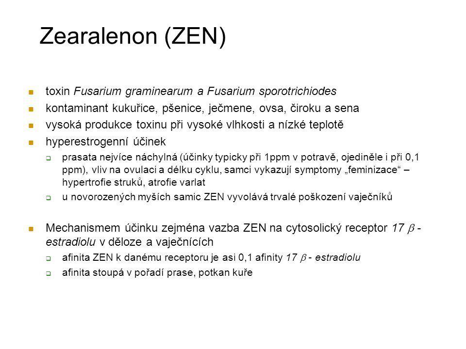 Zearalenon (ZEN) toxin Fusarium graminearum a Fusarium sporotrichiodes