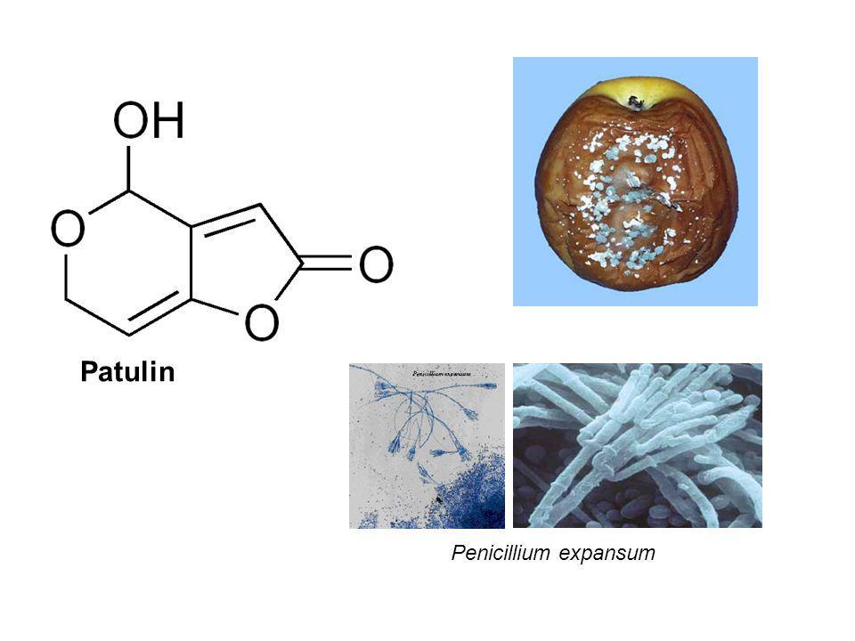 Patulin Penicillium expansum