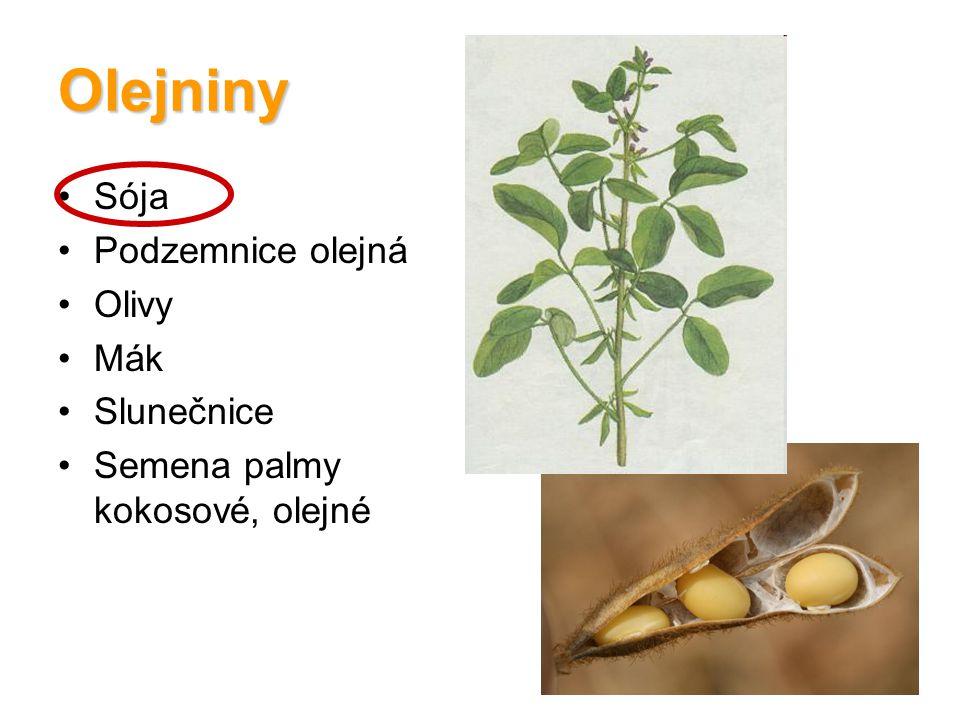 Olejniny Sója Podzemnice olejná Olivy Mák Slunečnice