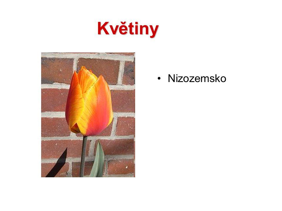 Květiny Nizozemsko
