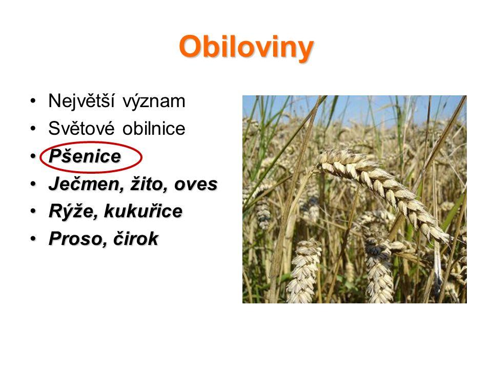 Obiloviny Největší význam Světové obilnice Pšenice Ječmen, žito, oves