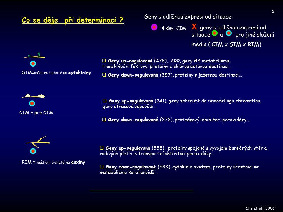 X geny s odlišnou expresí od situace a pro jiné složení