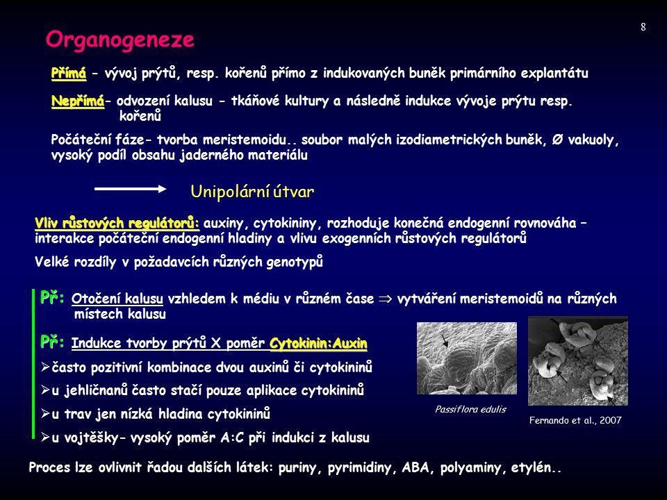 Organogeneze Unipolární útvar