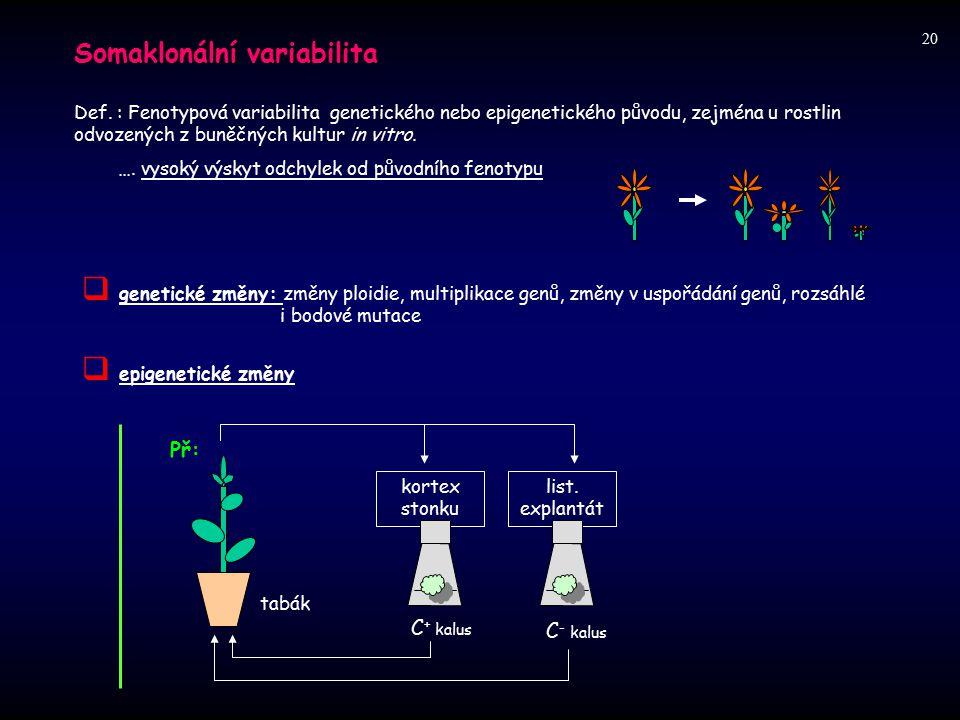 20 Somaklonální variabilita.