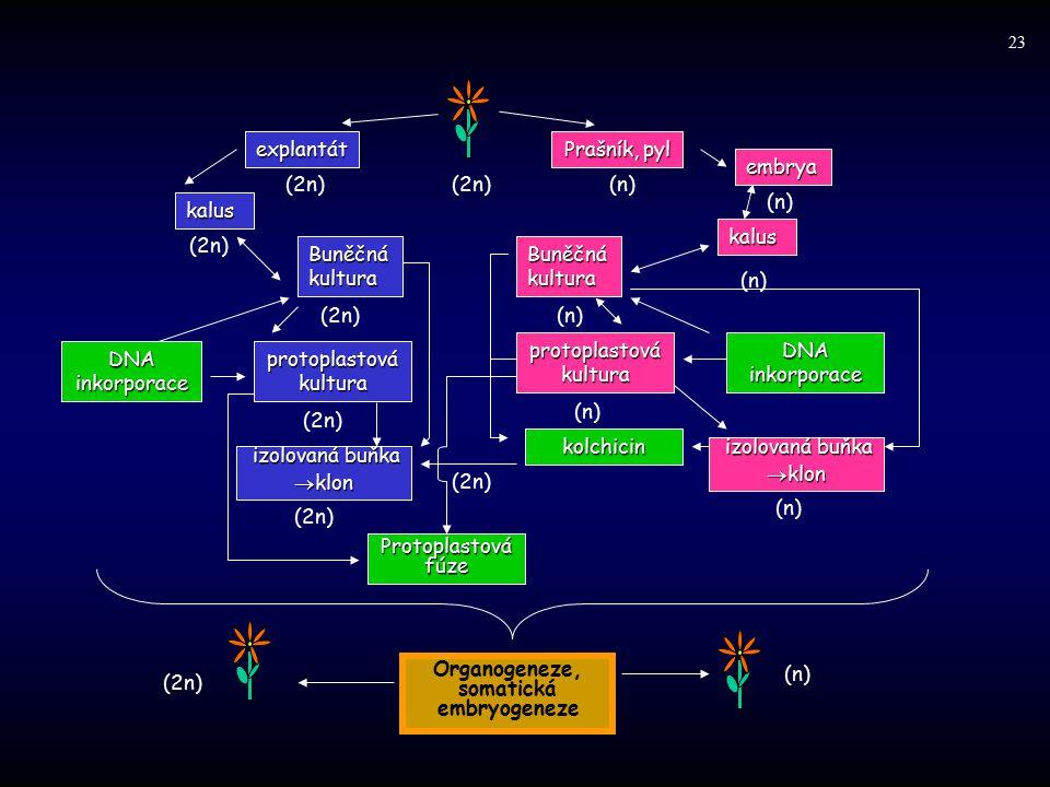 Organogeneze, somatická embryogeneze