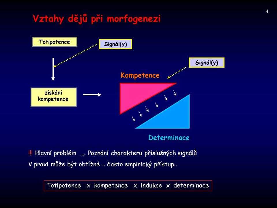 Vztahy dějů při morfogenezi