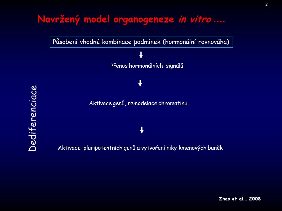 Navržený model organogeneze in vitro ….