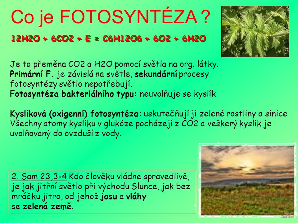 Co je FOTOSYNTÉZA 12H2O + 6CO2 + E = C6H12O6 + 6O2 + 6H2O