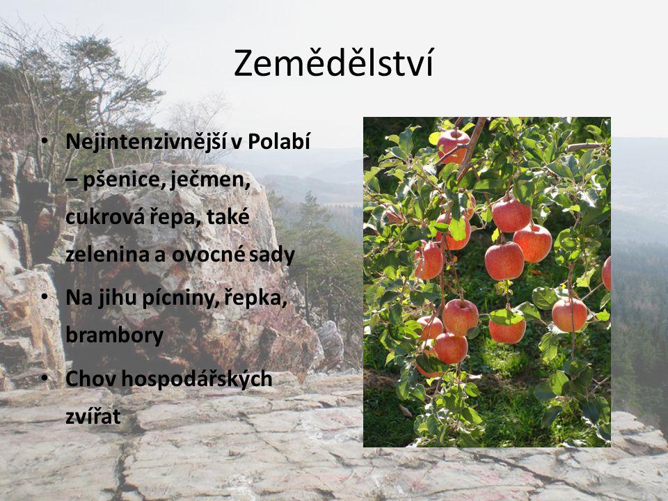 Zemědělství Nejintenzivnější v Polabí – pšenice, ječmen, cukrová řepa, také zelenina a ovocné sady.