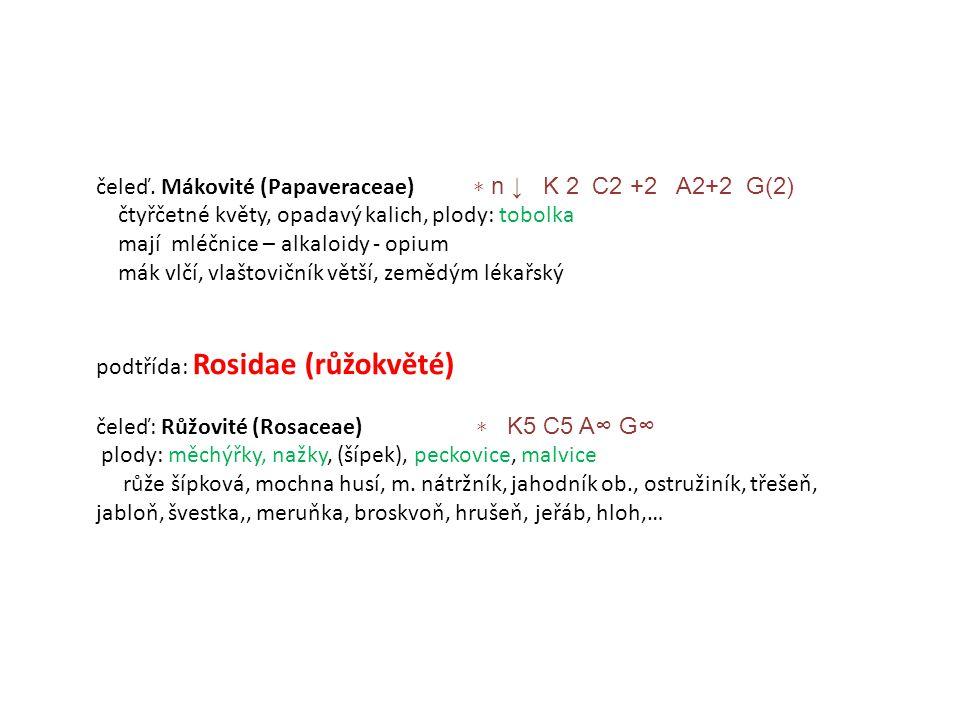 čeleď. Mákovité (Papaveraceae) ∗ n ↓ K 2 C2 +2 A2+2 G(2)