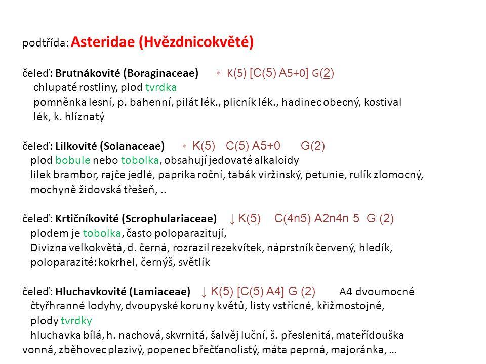 podtřída: Asteridae (Hvězdnicokvěté)