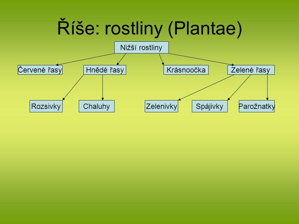 Říše: rostliny (Plantae)