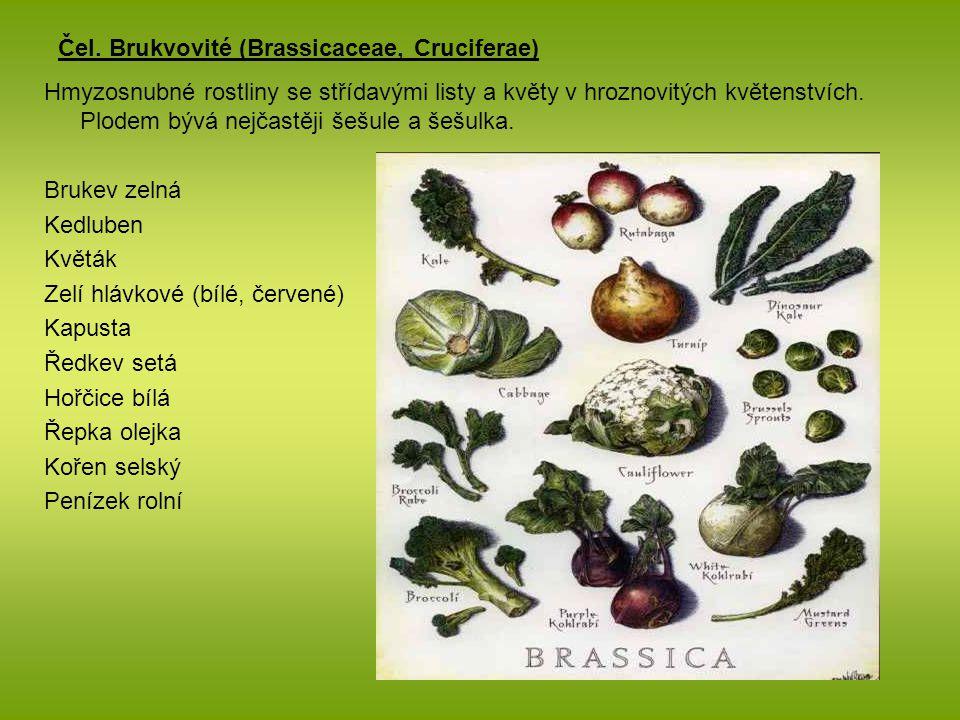 Čel. Brukvovité (Brassicaceae, Cruciferae)