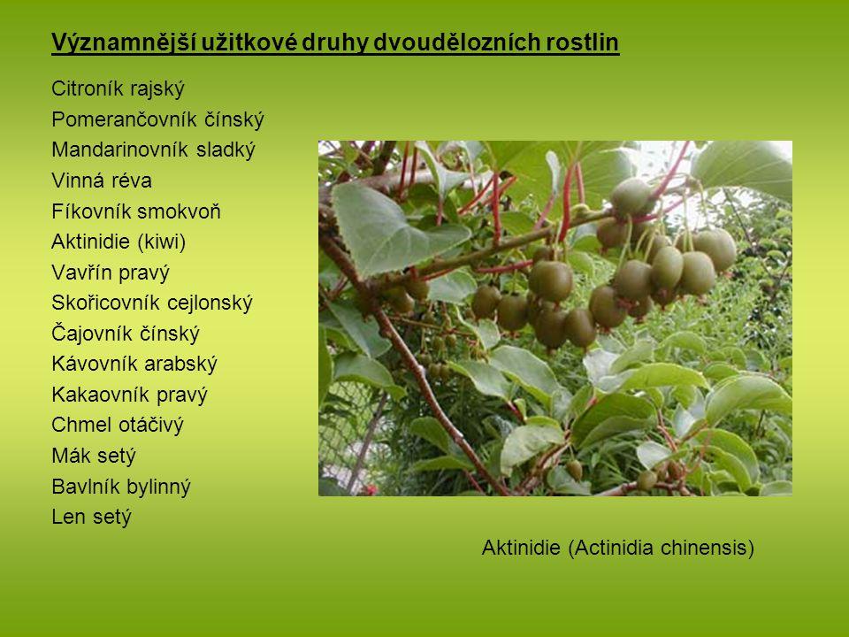 Významnější užitkové druhy dvoudělozních rostlin