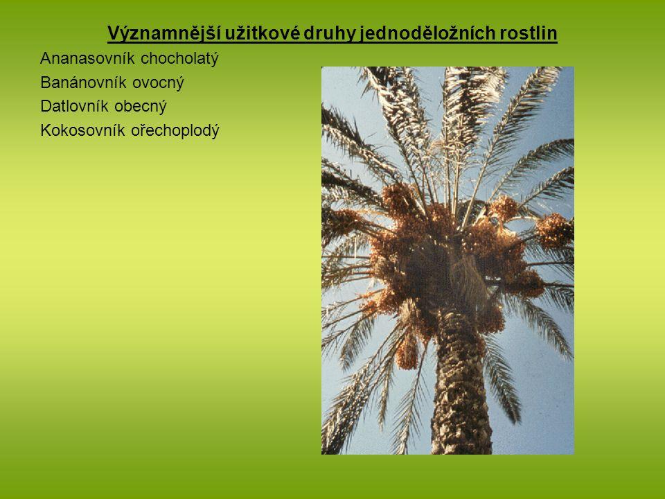 Významnější užitkové druhy jednoděložních rostlin