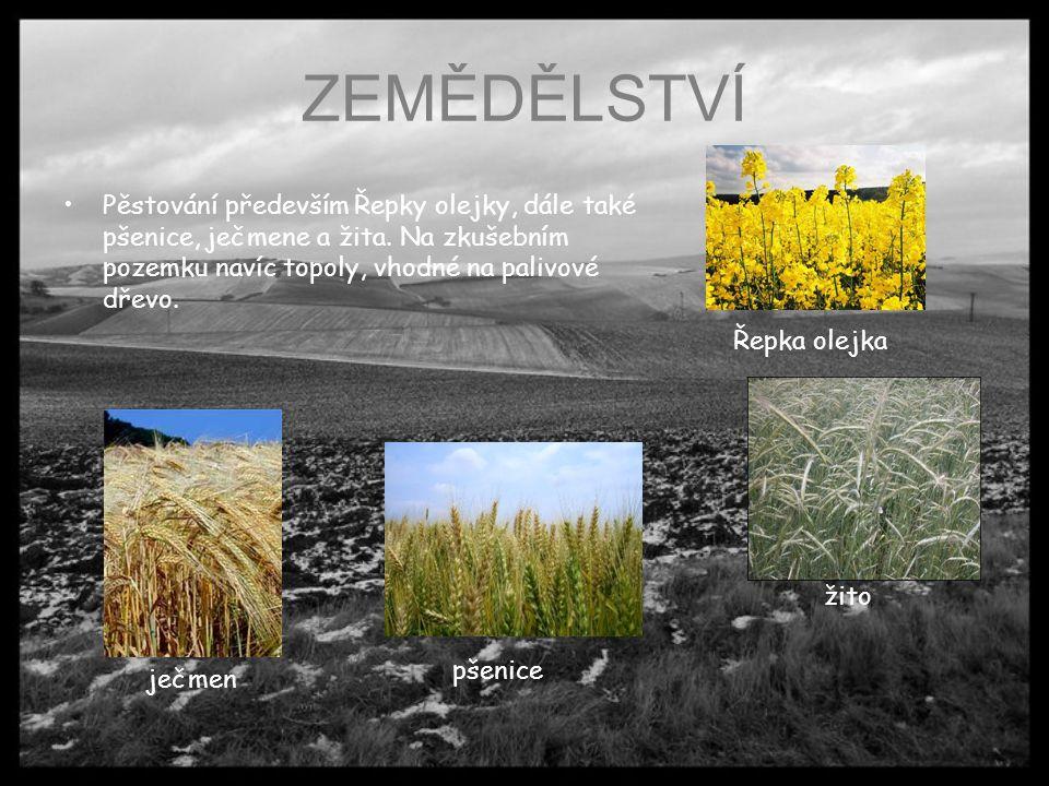 ZEMĚDĚLSTVÍ Pěstování především Řepky olejky, dále také pšenice, ječmene a žita. Na zkušebním pozemku navíc topoly, vhodné na palivové dřevo.