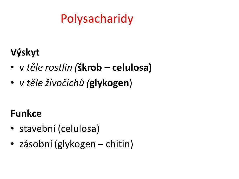 Polysacharidy Výskyt v těle rostlin (škrob – celulosa)