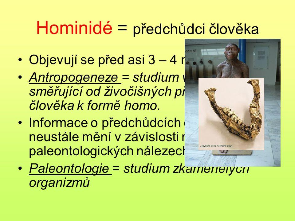 Hominidé = předchůdci člověka