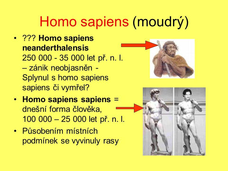 Homo sapiens (moudrý)